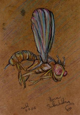 Libellula (8 Gennaio2006)